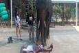 Masaj yapan fil dikkat çekiyor