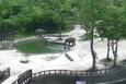 Havuza düşen yavrularını kurtaran filler