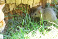 Kedi fareyle oynadı o anlar böyle görüntülendi