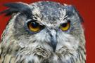 50 kişiyi yaralayan baykuşa ömür boyu hapis!