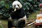 Dünyanın en yaşlı pandası Jia Jia'dan kötü haber!