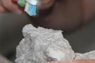 Hayvan fosilinde şaşırkan keşif