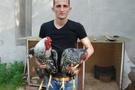 Dana fiyatına tavuk satın aldı