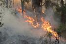 İzmir'de orman yangını! 30 hektar kül oldu!