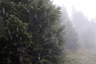 Bolu'ya yılın ilk karı yağdı!