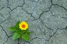 Küresel iklim değişikliği Dünya Doğa Mirası alanlarını tehdit ediyor