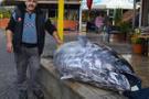 Bu balık ilk kez görüldü kaç kilo olduğunu duyunca şoke olacaksınız