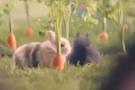 Tavşanlar gibi sevişin! Polonya vatandaşlarına bu çağrıyı yaptı!