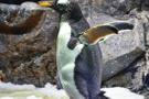 Karlı yollarda yürüyüşte penguen taktiği