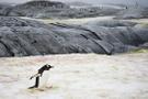 NASA dünyanın en büyük buzulunda yarık tespit etti