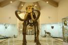 Türkiye'nin ilk zooloji ve doğa müzesi açılıyor