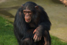 Doğduğundan beri maymunlarla yaşıyor 8 yıl sonra bulundu