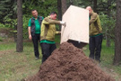 Çankaya Köşkü'nde kırmızı orman karıncaları nöbette