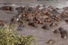 Çin'de 66 milyon yıllık timsah fosili bulundu