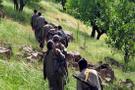PKK'ya Bingöl'de bir darbe daha