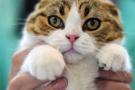 Çok konuşulan karar: Kedi katiline 16 yıl hapis cezası!
