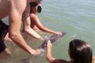 Selfie sevdası yavru bir yunus balığını öldürdü
