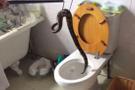 5 yaşındaki çocuk tuvalete giderken... Klozetten çıkan şeye bakın!