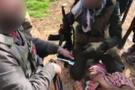 YPG'li terörist böyle teslim alındı! Sınırdan sıcak görüntüler