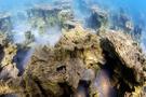 Türk askerleri Van Gölü'nde yeni bir balık türü keşfetti