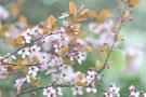 Nevruz'da neler yapılır geleneklere göre nevruz kutlaması
