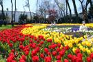 İBB'nin düzenlediği 13. İstanbul Lale Festivali başladı