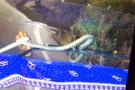 TIR'ın sileceğine dolanan yılanı görünce