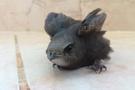 Gaziantep'te bir kişi ebabil kuşu buldu