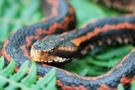 Trabzon'da ortaya çıkmıştı! 2 metre boyundaki yılan...