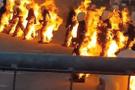 32 kişi aynı anda kendini ateşe verdi!