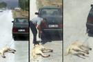 Köpeği otomobile bağlayıp sürüklemişti! Serbest bırakıldı