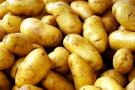 Avrupa'da patates sancısı başladı
