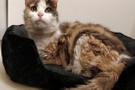 Kayıp kedi 17 yıl sonra geri döndü!