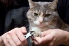Kedilerde tırnak bakımı nasıl olmalı, kedilerin tırnak yapısı nasıldır?