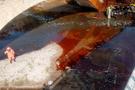 Karabük'te kimyasal madde paniği balıkları bile öldürdü