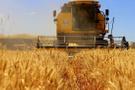 Buğday üretiminde kriz alarmı!