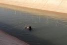 Sulama kanalına giren Suriyeli Muhammed boğuldu!