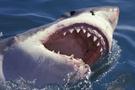 Köpekbalığı kebabı yediniz mi?