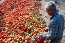 Organik tarıma enstitü desteği geliyor