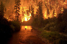 Alaşehirde orman yangını
