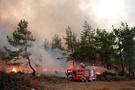 Mudanya'da 25 dönüm zeytinlik yandı