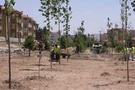 Niğde Belediyesi parklara el attı