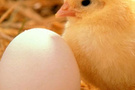 Yumurtadan çıkmadı annesi doğurdu