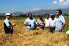 Gölhisar makarnalık buğday üretecek