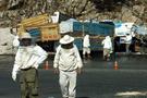 Muğla'da arı yüklü kamyon devrildi