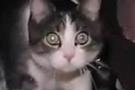 Jüri üyesi seçilen kedi, sahibini zor durumda bıraktı