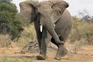 Hindistan'da filleri elektrik çarptı