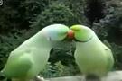 Bu kuşların muhabbeti epey koyu
