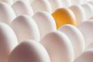 Bakkallar artık yumurta satamayacak!