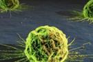 50'li yaşlarda kanser ölümleri azaldı